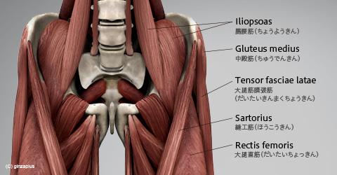 「股関節」の画像検索結果